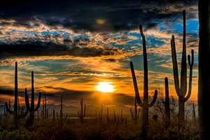 HDR-Cactus-Sunset-Saguaro-Park-300x200 The Sinclair Method (TSM) in California